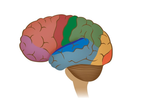 Taking Good Care of Your Prefrontal Cortex