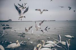 Si El Cuida de las Aves. . .