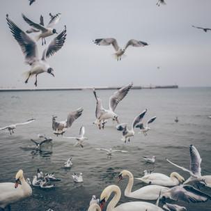 Bird flock season