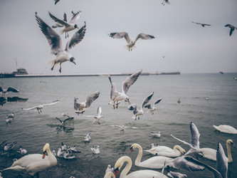 The Seagull Squabble - An NGSS-Aligned PBL Concept