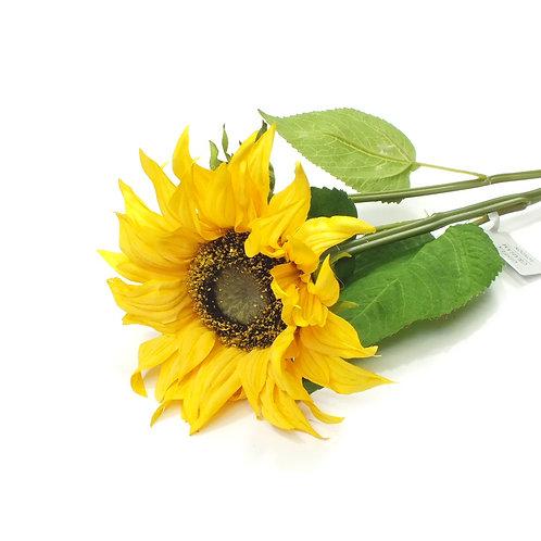 Sunflower Stem With Bud