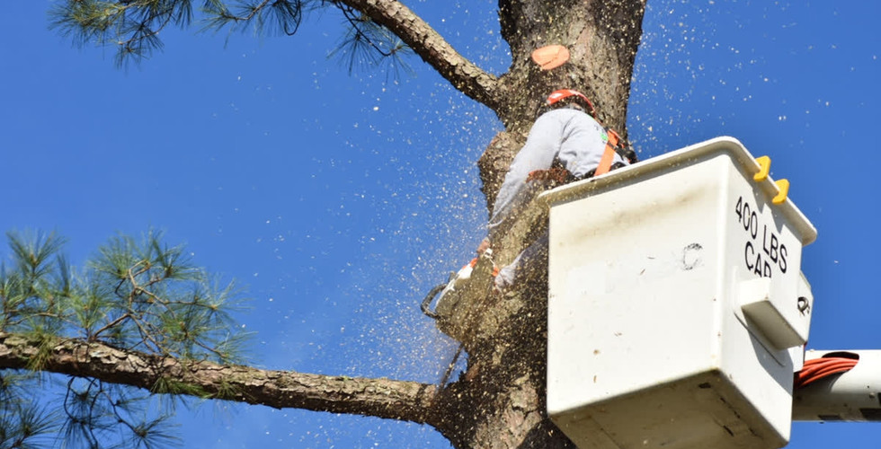 K3 Full Service Tree Care