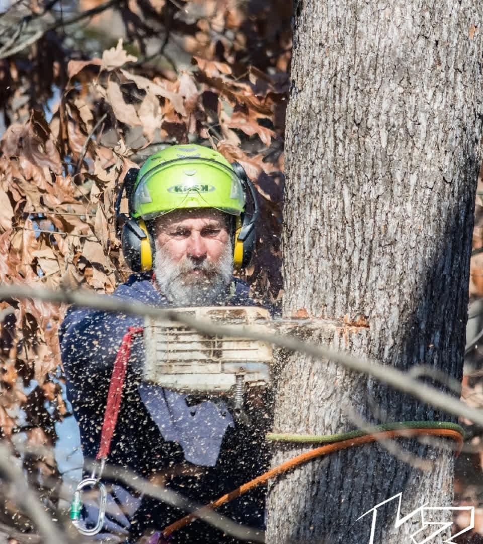 Kenny York Cutting Tree