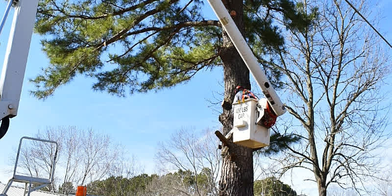 K3 Technical Tree Removal