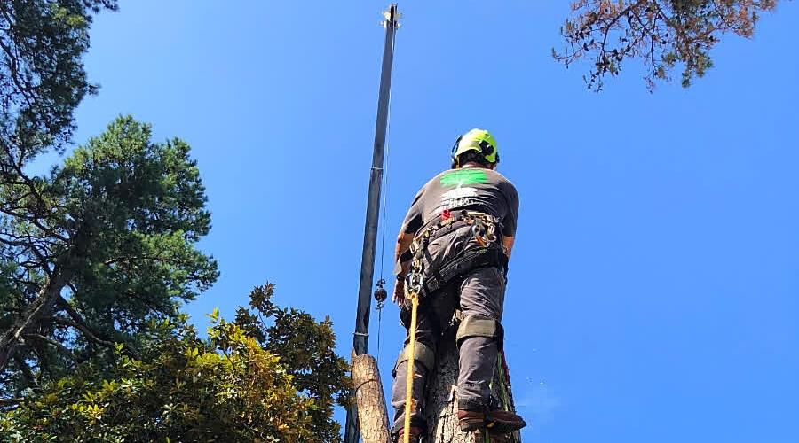 K3 Precision Tree Removal