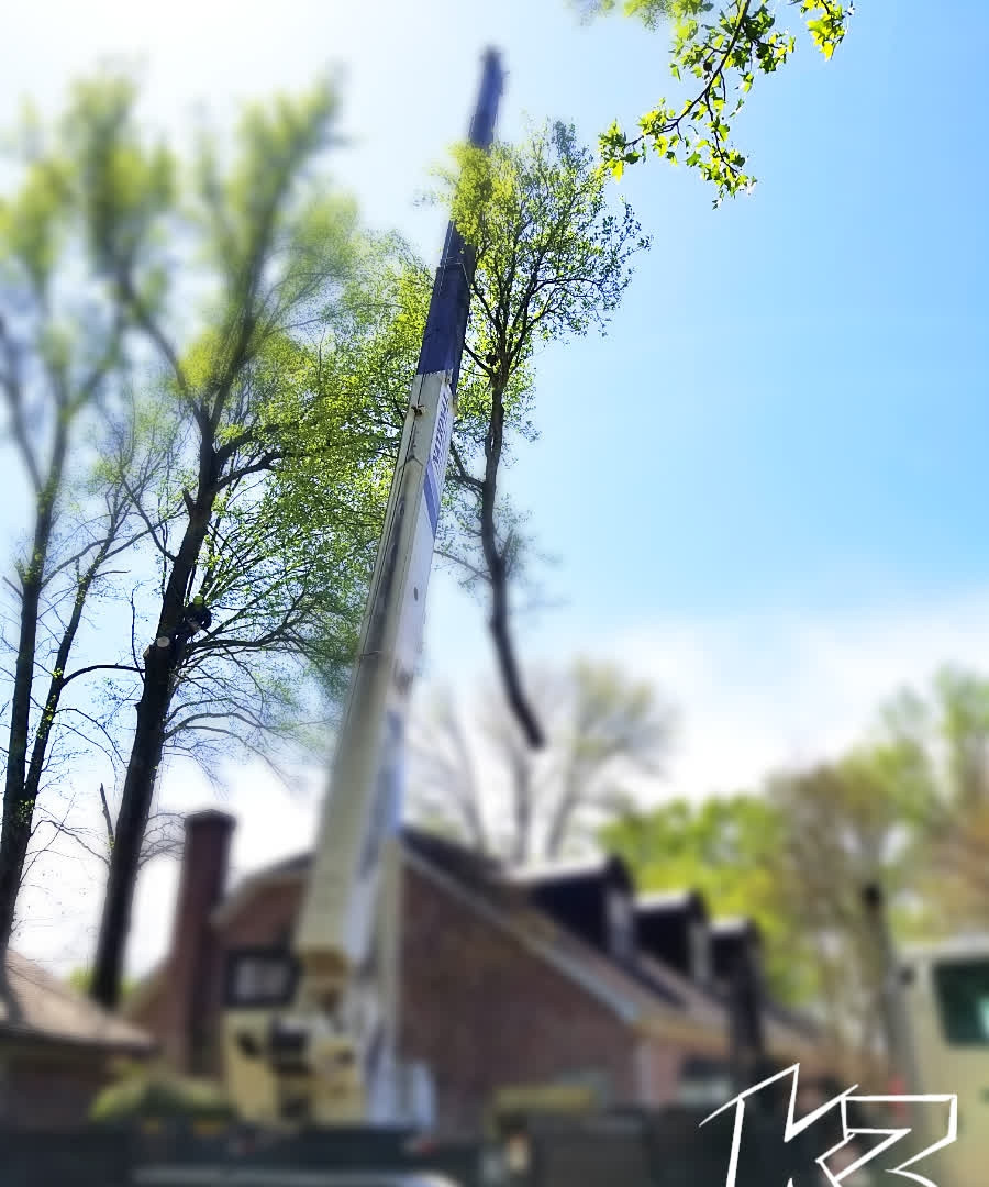 K3 Crane Tree Service
