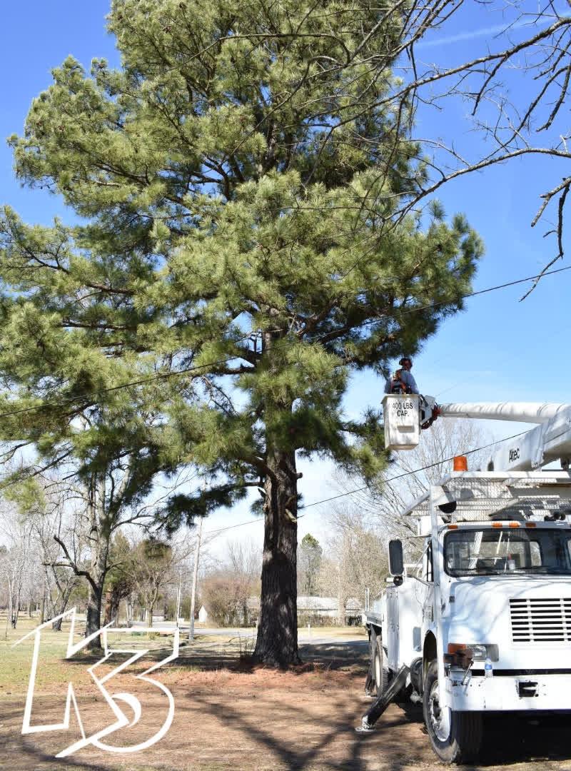 K3 Bucket Truck Tree Maintenance