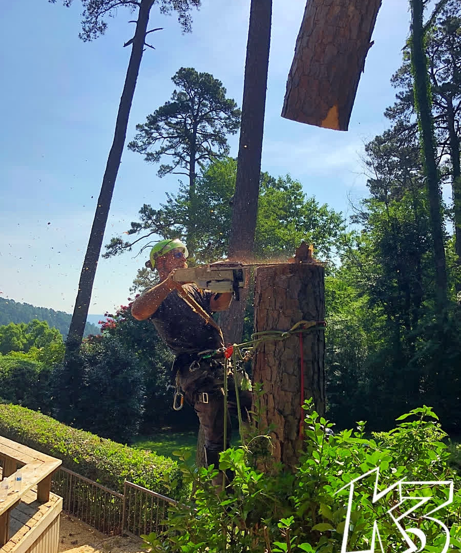 K3 Large Tree Removal