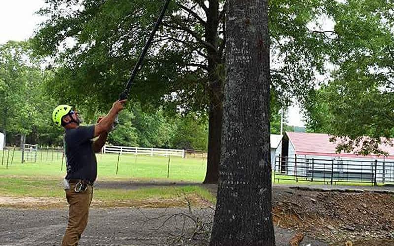 K3 Tree Pruning