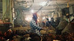 Chicken-market.jpg