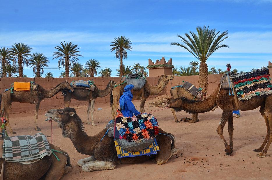 sahara-morocco_t20_XQdoK6.jpg