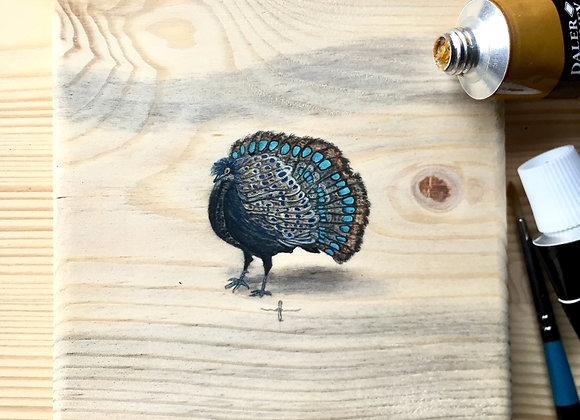 Malayan Peacock-pheasant