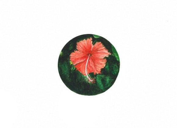 Hibiscus Rosa-Sinesis AP