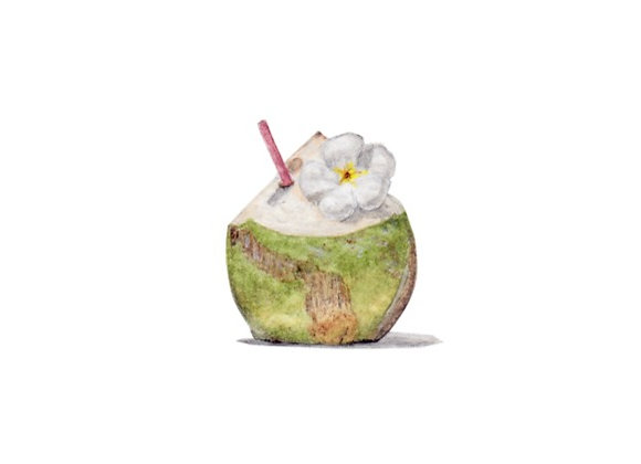 Coconut Drink AP