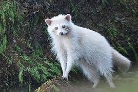 white racoon.jpg