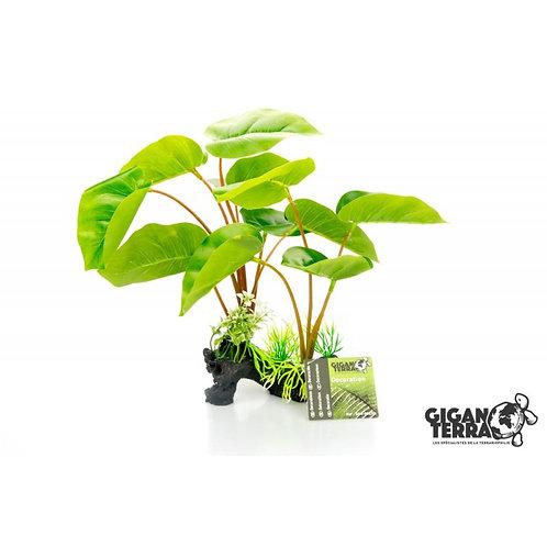 Plante sur pied - Hauteur 30 cm - PHILODENDRON ERUBESCENS