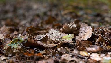 sol-forestier-recouvert-de-feuilles-en-1