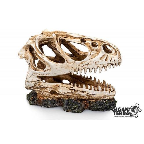 Crâne dinosaure - 13X06X11CM ref:336