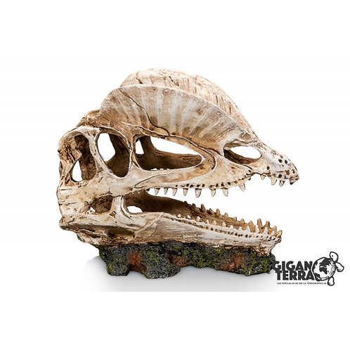 Crâne dinosaure - 19X09X14 CM ref:335