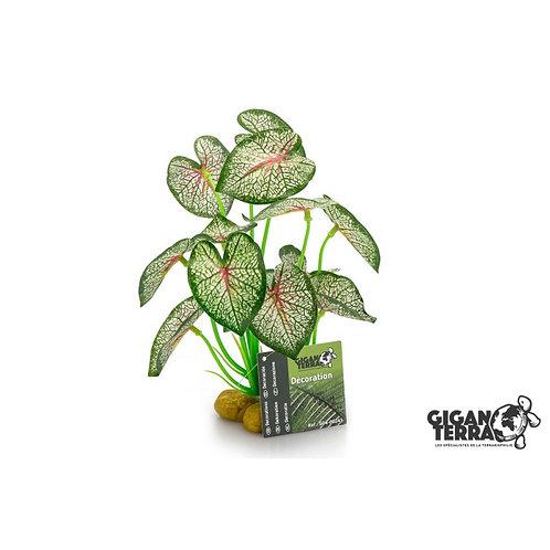 Plante sur pied 2 - 21 cm