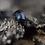 Thumbnail: Glomeris marginata x5