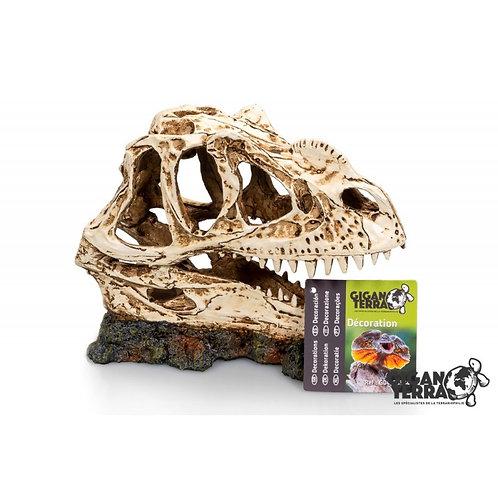 Crâne dinosaure - 19X09X14CM ref:334