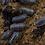 Thumbnail: Armadillidium depressum x10