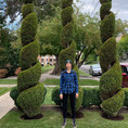 Topiary Shape and Design