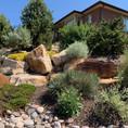 Desert/Native Garden