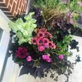 Flower Pot Design