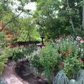 Rose Garden Maintenance / Care