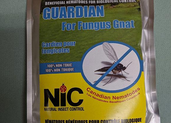 Nematodes for Fungus Gnats