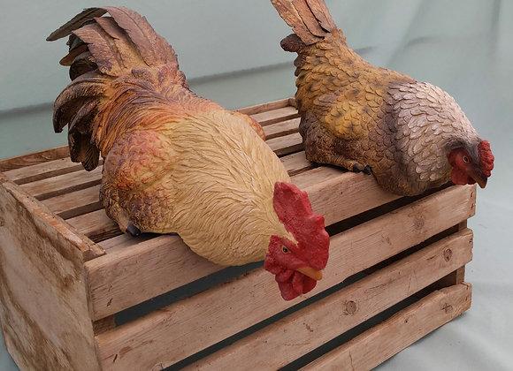 Shelf Rooster