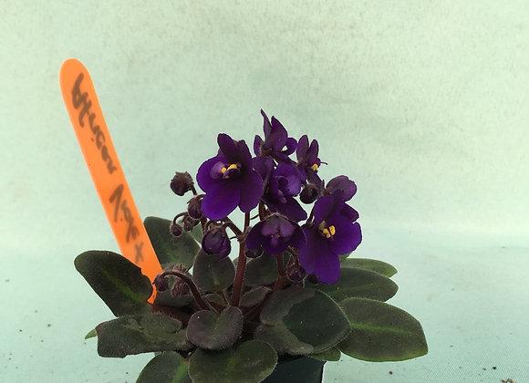 "2"" Mini African Violet"