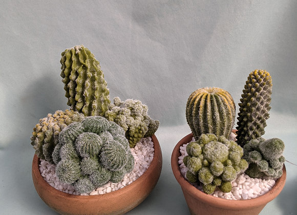 Faux Cactus in Pot - Assorted