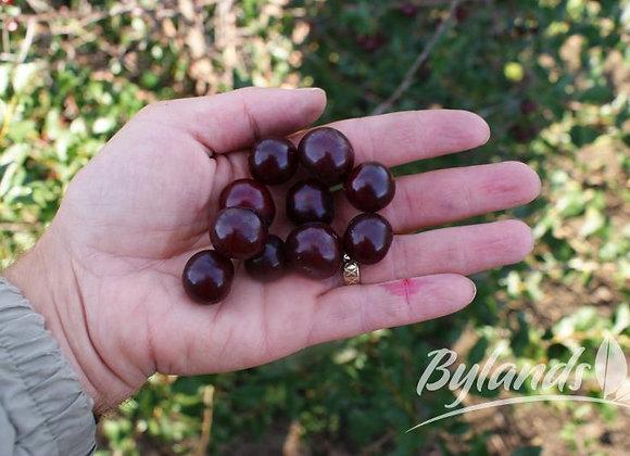 Cherry - Romeo