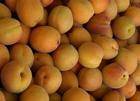 Apricot - Westcot