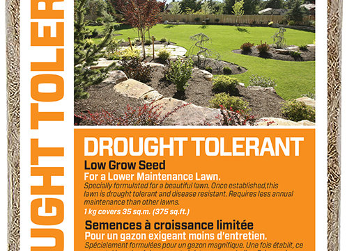 HGE Drought Tolerant Lawn Seed