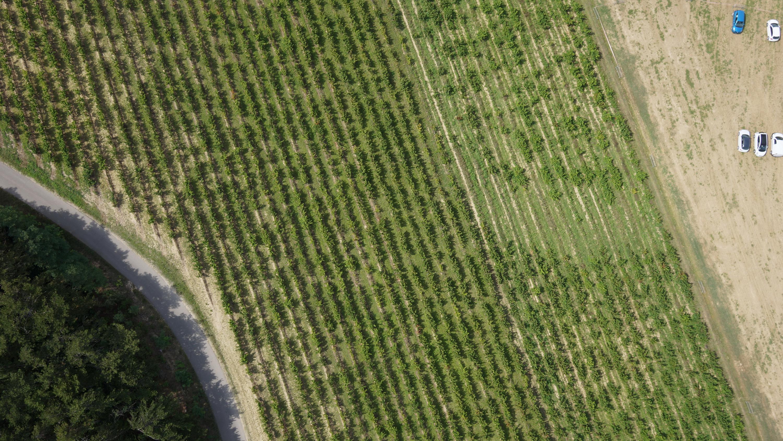 Vignes drone vaucluse