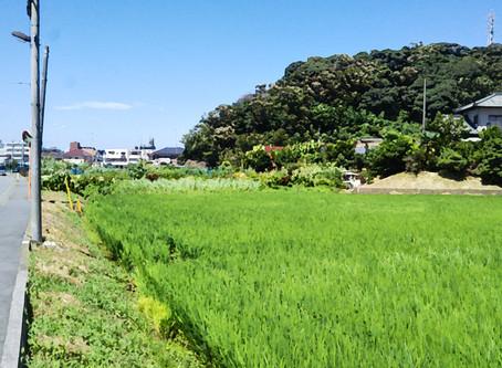 鎌倉の夏 山編