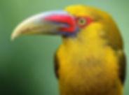Saffron Bird Small.jpg