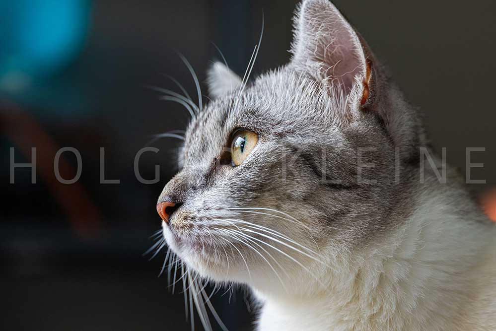 Portrait of a female kitten.