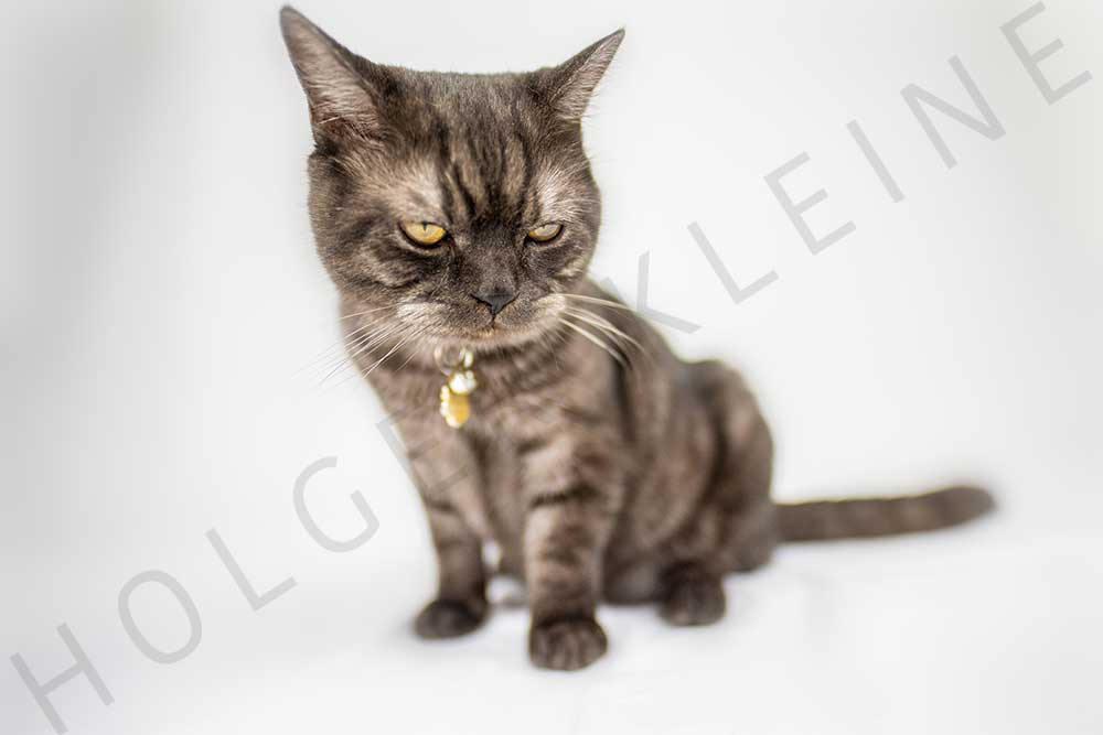 Black adorable kitten on white background