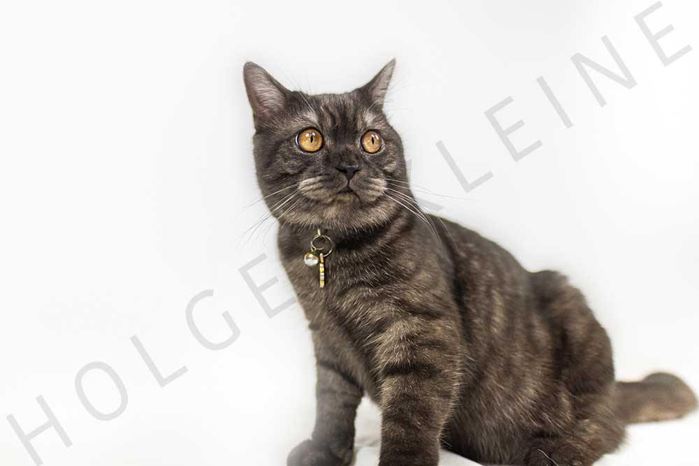 Black adorable kitten on white background looks curiously around