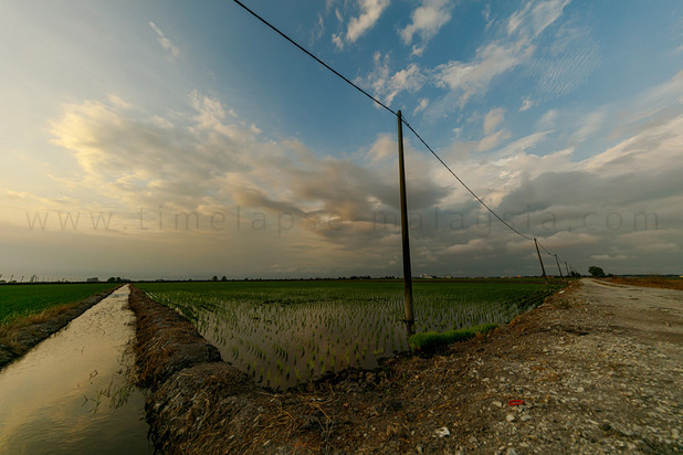 Sunrise in spring time on a rice paddy field.