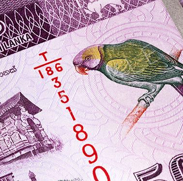 Macro photography of 500 Sri Lanka Rupee