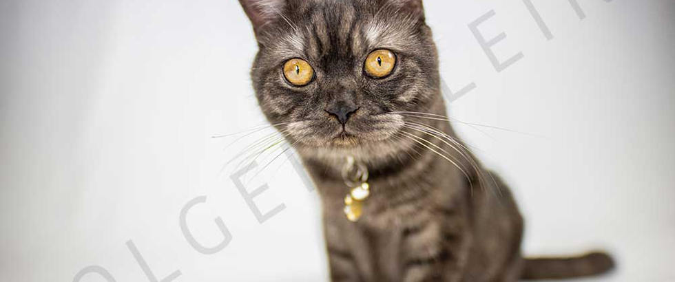 Black adorable kitten on white background looks curiously