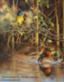 Under the Alders – Nashville Warbler and Green-Winged-Teal, oil on canvas – All rights reserved © Monique Benoit