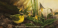 Wilson's Warbler and Trout Lilies, oil on canvas – All rights reserved © Gisèle Benoit