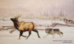 La poursuite – Loups et cerf wapiti, huile sur toile – Tous droits réservés © Monique Benoit